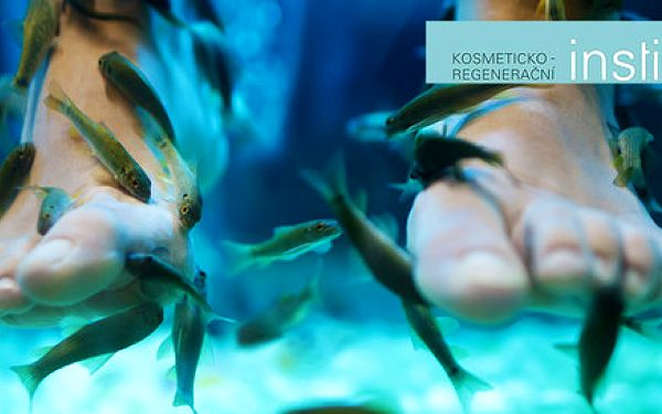 Ozdravná lázeň nohou s rybkami Garra Rufa