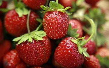 Pozdní jahody - 10ks sazenic