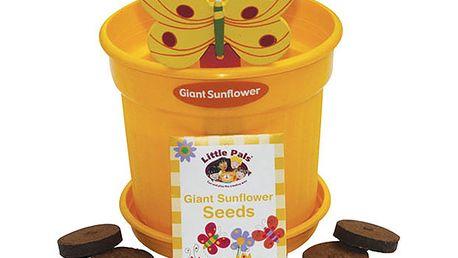 Set pro pěstitele - slunečnice