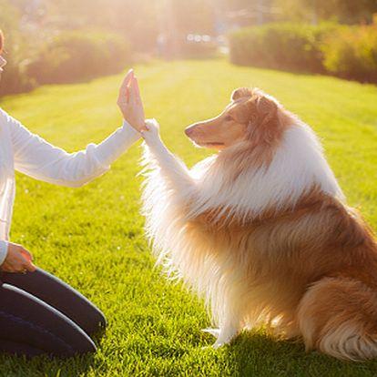 Základní výcvik psů pod vedením zkušeného instruktora – 10 lekcí