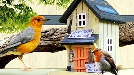 Originální ptačí budky a krmítka