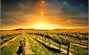 Zájezd Slovácké vinohrady