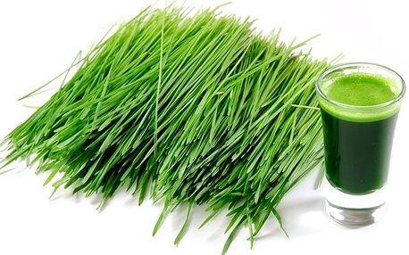 Zelená mladá pšenica + Zelený mladý ječmen + Shaker ZDARMA