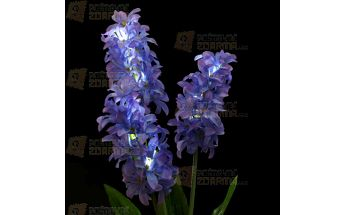 LED světelná květina - hyacint a poštovné ZDARMA! - 30014165