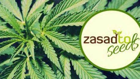 Sleva 20% na semínka konopí české seed banky ZasadTo Seeds! - Sleva na semínka konopí Zasadto