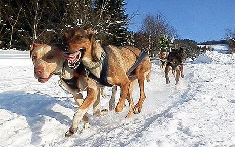 Hodinová zážitková jízda se psím spřežením