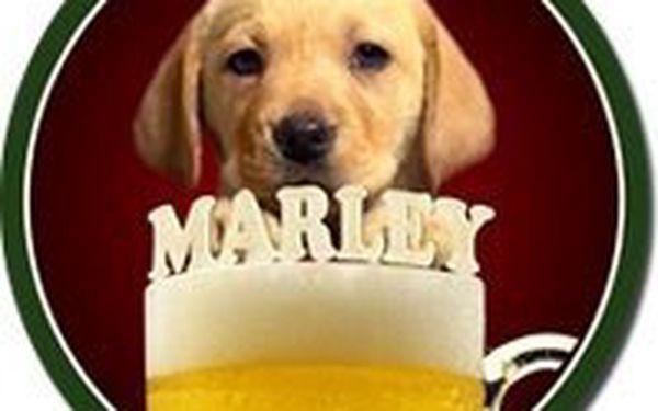 Pivní Bar Marley