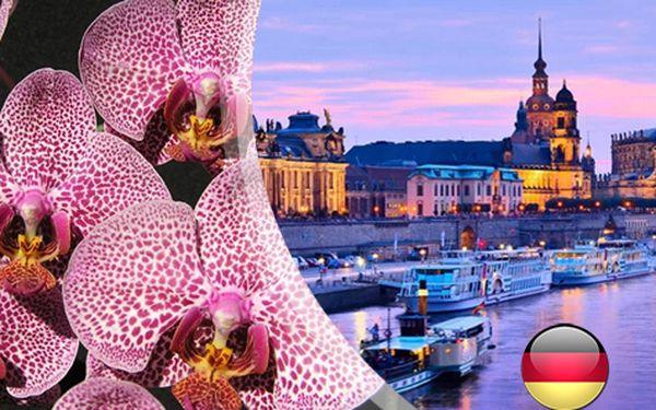 Drážďany s návštěvou největší výstavy orchidejí v Německu