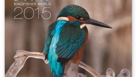 Ledňáčci, poznámkový kalendář 2015, 30 x 30 cm