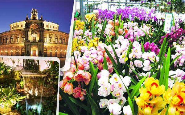 Za orchidejemi rozhodně do Drážďan