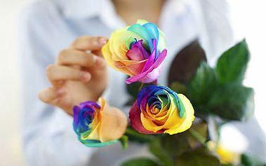 200 semen unikátní duhové růže jako z pohádky