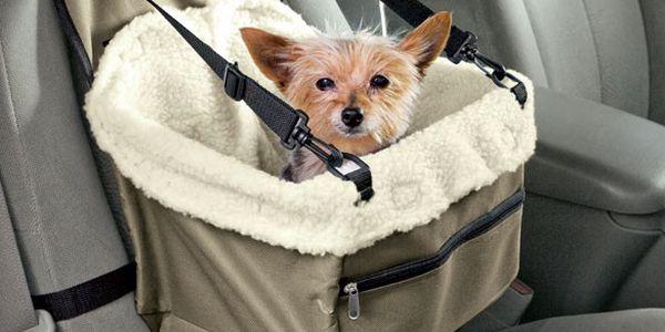 Autosedačka pro psy - bezpečí především!