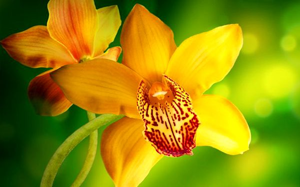Jednodenní zájezd do Drážďan pro 1 spojený s největší výstavou orchidejí v Evropě
