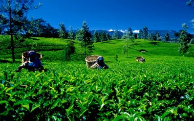 Okruh v srdci Srí Lanky 4*
