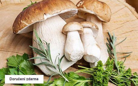 Dvě balení zimní sadby 8 druhů lesních hub – doručení zdarma