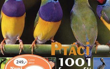Ptáci 1001 fotografií