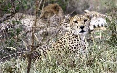 Safari okruh Keňou s pobytem u moře - Hotel Southe, Keňa, letecky, strava dle programu