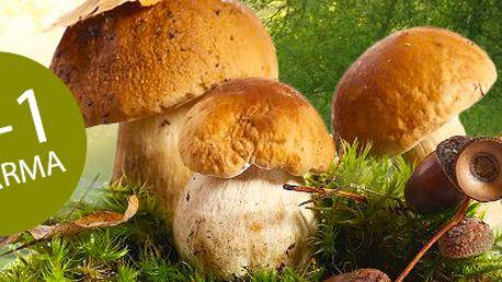 Vypěstujte si vlastní houby! Akce: 2 + 1 pěstební sada 8 druhů hub.