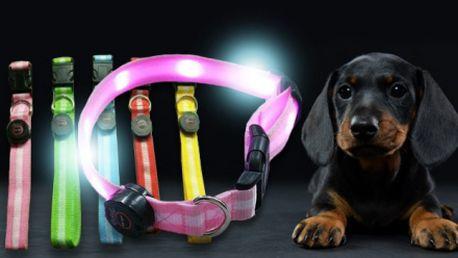 Svítící LED obojek pro pejsky i kočičky v 5 barvách včetně poštovného! Pro všechny velikosti psů a koček!