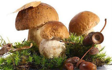 Sadba mixu lesních hub pro vaši zahrádku