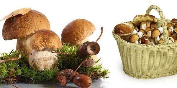 Akce 2 + 1 : TŘI sadby pěstebního mixu osmi druhů lesních hub za jedinečnou cenu 159 Kč. Vypěstujte si houby u Vás na zahrádce !!