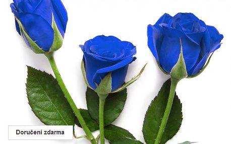 200 ks semen modré růže
