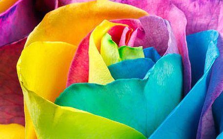 200 semínek duhové růže