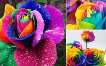 Duhové růže 200 semínek