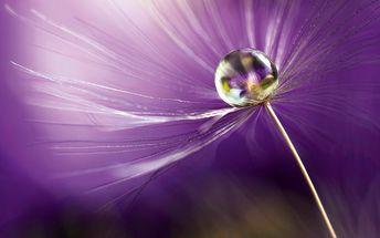 Skleněný obraz In Shades of Purple 60x80 cm