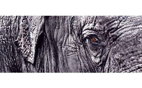 Skleněný obraz Tenbo 50x125 cm