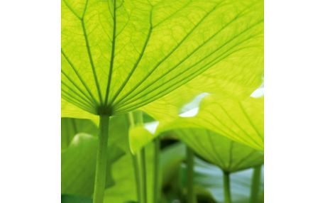 Skleněný obraz Lotus Leaves 30x30 cm