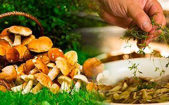 Zimní sadba 8 druhů lesních hub. 2 sady za jedinečnou cenu! Připravte se na jarní úrodu hub už nyní a vysaďte si na zahrádce či v květináči své vlastní houby! Výsadba je jednoduchá a díky přiloženému návodu ji zvládne každý!