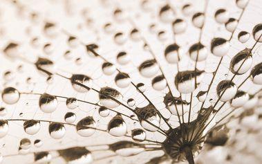 Skleněný obraz After the Rain 20x20 cm