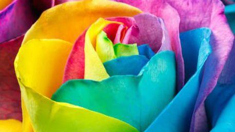 Semínka kouzelných duhových růží - 200 kusů