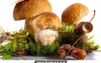 Vypěstuj si houby doma na zahrádce!