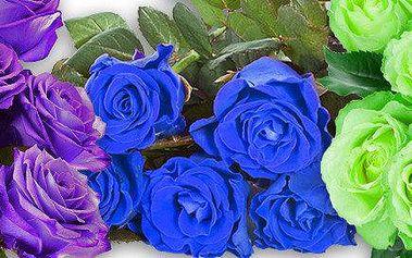 200 semen růží - 5 výjimečných barev