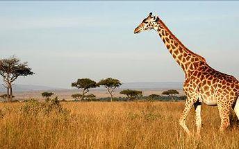 Toužíte po teple a sluníčku? Vydejte se na 12 denní dovolenou do exotické Keni v termínu 29.3.-10.4. Odpočiňte si na pláži a poznejte kulturu Masajů.