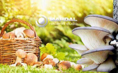 2 balení LESNÍCH HUB po 8 druzích pro výsadbu na zahradě! Vypěstujte si vlastní houby!