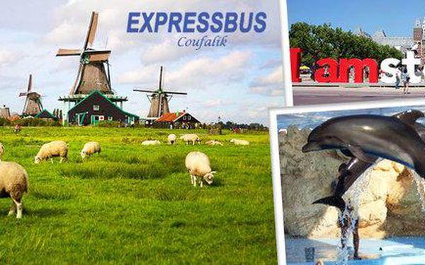 4denní Holandsko – delfinárium, mlýny i Amsterdam
