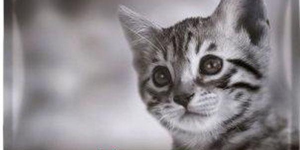 Kompletní a vyvážené krmivo pro koťata ve věku 1–12 měsíců - Purina Pro Plan Junior Chicken 10 kg