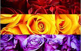 Semínka růží