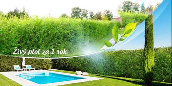 JILM SIBIŘSKÝ neboli Turkestánský brest! 20 kusů těchto silných dvouletých a extrémně rychle rostoucích rostlin!