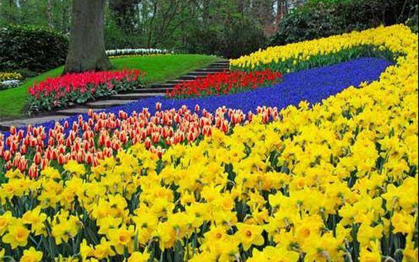 Poznejte krásy největšího květinového parku Nizozemsko - Keukenhof - Amsterdam