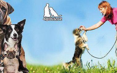 Nezvládáte svého pejska? - Individuální lekce 60 minut ve psí škole 4dogs.cz