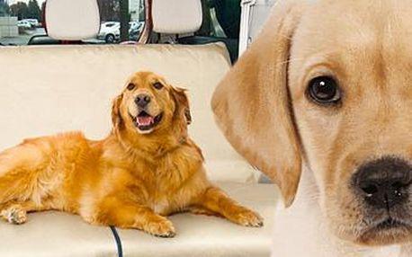 Potah do auta pro domácí zvířátka: Konec zápachu, škrábancům, špíně a chlupům!