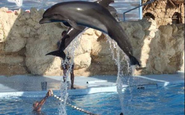 Delfinárium - největší mořský park v Evropě s návštěvou větrných mlýnů v Amsterdamu