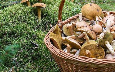 Pěstitelská sada 8 druhů hub 20 g