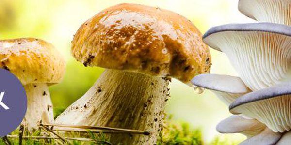 3 balení jarní sadby lesních hub: vypěstujte si doma vlastní houby! 8 druhů hub.