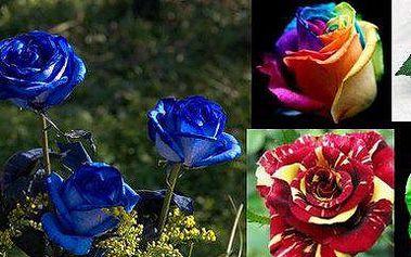 200ks semen barevných růží včetně poštovného