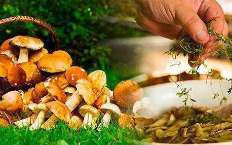 Sadba 8 druhů lesních hub - 2 sady. Jednoduchou výsadbu zvládne každý